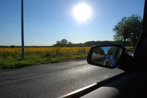 Floarea-Soarelui-2